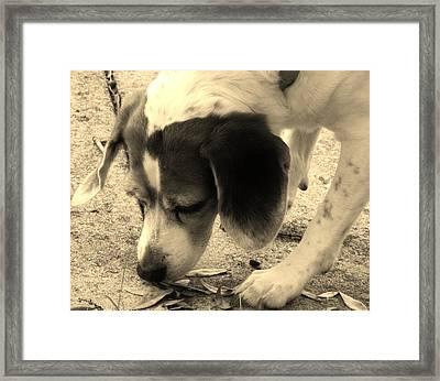 Bella Framed Print by Tara Miller