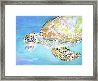 Bella's Lone Turtle Framed Print by Viviana Ziller