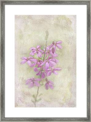 Framed Print featuring the photograph Belle by Elaine Teague