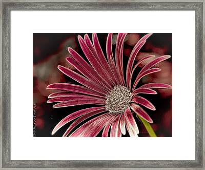 Belle Of The Ball Framed Print by Wallaroo Images