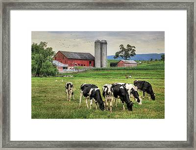 Belleville Cows Framed Print by Lori Deiter