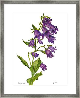 Bellflower - Campanula Framed Print by Janet  Zeh
