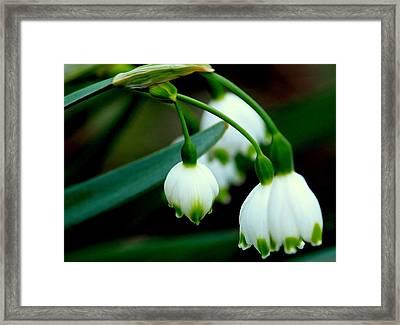 Bells In Nature Framed Print by Rosanne Jordan