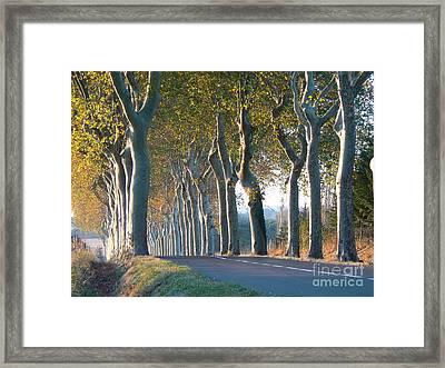Beloved Plane Trees Framed Print by France  Art
