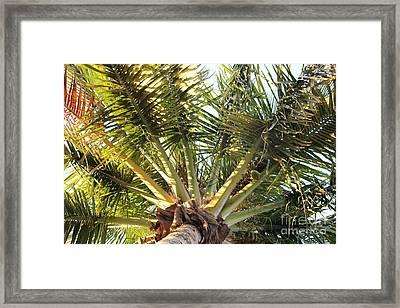Below A Palm Tree Framed Print