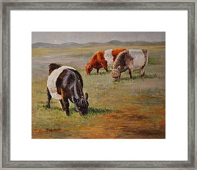 Belted Galloway Cows -tri-color Trio Framed Print by Louise Charles-Saarikoski