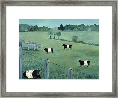 Belted Galloways Framed Print by Fay Sciarra