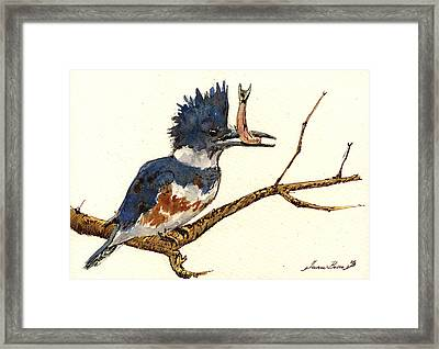 Belted Kingfisher Bird Framed Print by Juan  Bosco