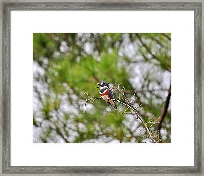 Belting Belted Framed Print by Al Powell Photography USA