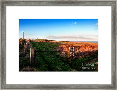 Bempton Cliffs Framed Print by David  Hollingworth