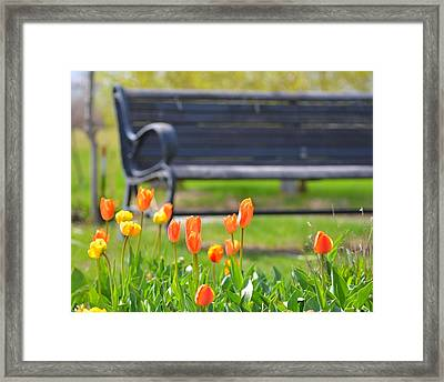 Bench Behind The Tulips Framed Print by Toby McGuire