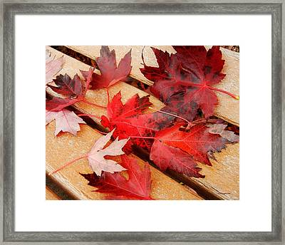 Bench Cushion Framed Print