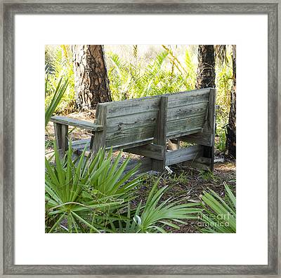 Bench In Nature Framed Print