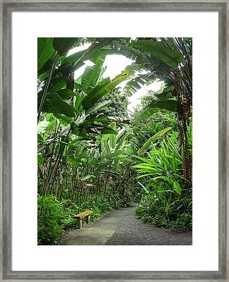 Bench In The Jungle - Hawaii Framed Print by Daniel Hagerman