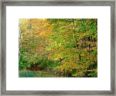 Bench In The Woods Framed Print by BackHome Images