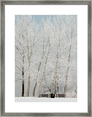 Benches And Hoar Frost Trees Framed Print by Rob Huntley