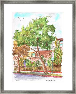 Bended Tree In Horn Drive - Hollywood Hills - Los Angeles - California Framed Print