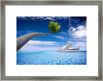 Framed Print featuring the photograph Bending Palm Tree by Boon Mee