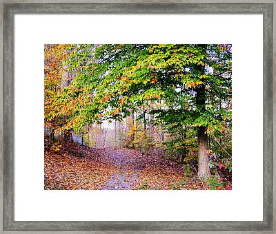 Beneath Branches Framed Print