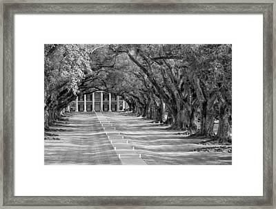 Beneath Live Oaks Bw Framed Print by Steve Harrington