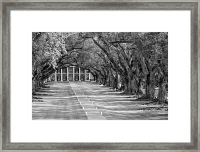 Beneath Live Oaks Bw Framed Print by Steve Harrington