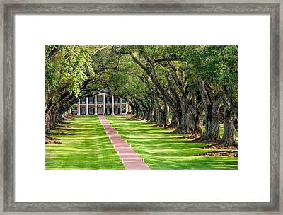 Beneath Live Oaks Framed Print by Steve Harrington