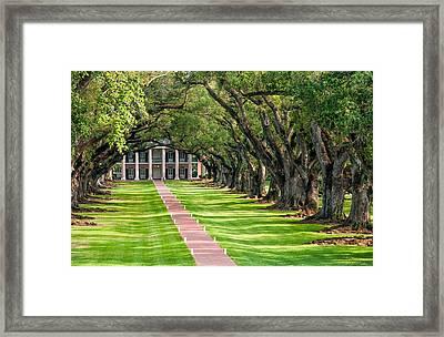 Beneath Live Oaks Framed Print by Steve Harrington