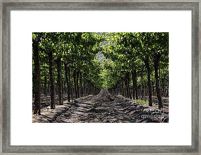 Beneath The Vines Framed Print by James Brunker