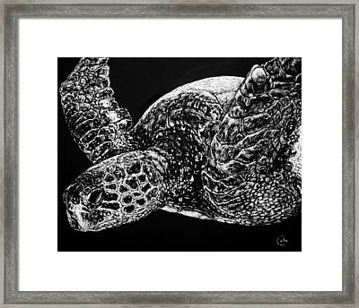 Beneath The Waves The Sea Turtle Swims Framed Print by Nathan Cole