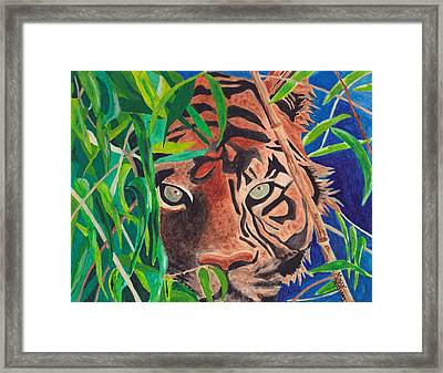 Bengal Eyes Framed Print by Molly Williams