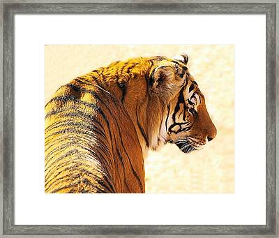 Bengal Tiger In Thought Framed Print by JAXINE Cummins