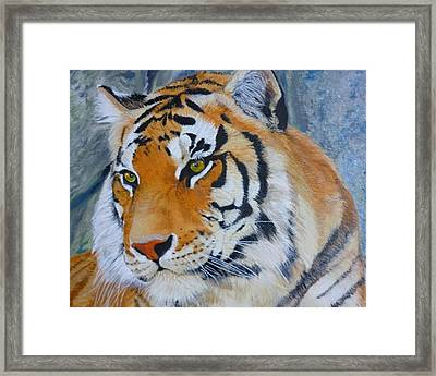 Bengal Tiger Original Oil Painting By Pigatopia Framed Print by Shannon Ivins