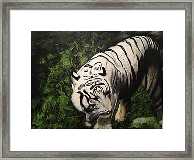Bengal's White Tiger Framed Print by Brindha Naveen