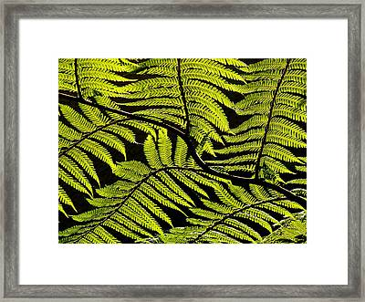 Bent Fern Framed Print