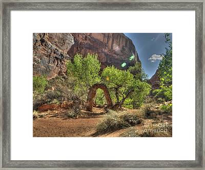 Bent Oak Framed Print by Rivers End Photography By Ryan Fuette
