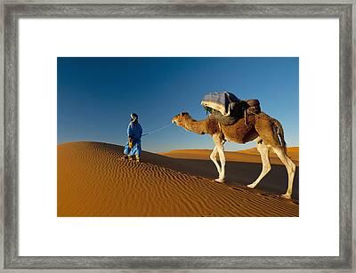 Berber Leading Camel Across Sand Dune Framed Print by Ian Cumming