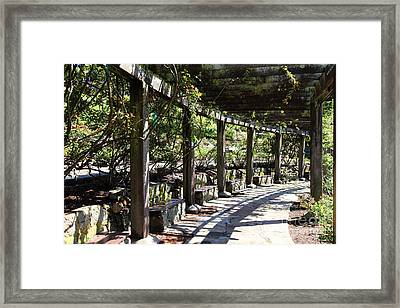 Berkeley Rose Garden 5d22411 Framed Print by Wingsdomain Art and Photography