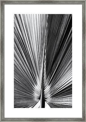 Bermuda Palmetto Monochrome Framed Print
