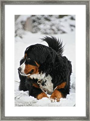 Berner Weather Framed Print by Susan Herber