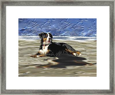 Bernese Mountain Dog Framed Print by EricaMaxine  Price