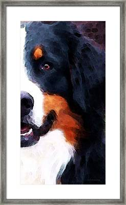 Bernese Mountain Dog - Half Face Framed Print by Sharon Cummings