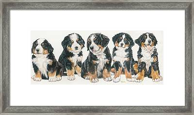 Bernese Mountain Dog Puppies Framed Print by Barbara Keith