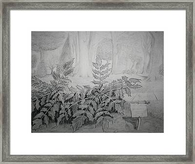 Framed Print featuring the drawing Bernheim Forest Plant by Stacy C Bottoms