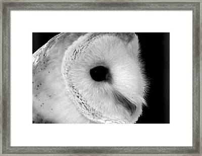 Bernie The Barn Owl Framed Print by Chris Whittle