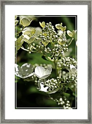 Berries And Blooms In Monochromatic Green Framed Print by Jp Grace
