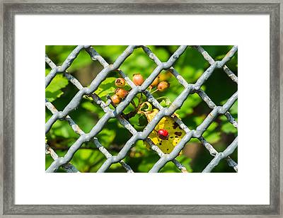 Berries And The City - Featured 3 Framed Print by Alexander Senin
