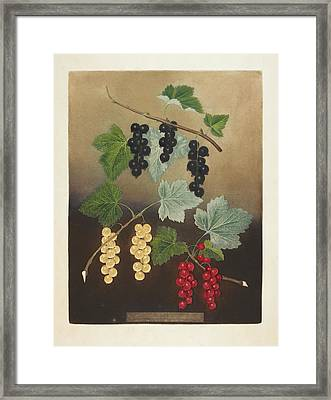 Berries Framed Print