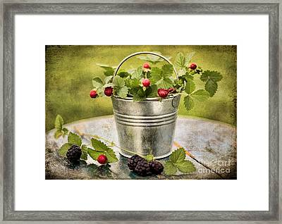 Berries Framed Print