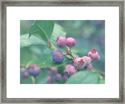Framed Print featuring the photograph Berries For You by Rachel Mirror