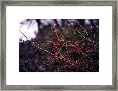 Berries  Framed Print by Heather L Wright